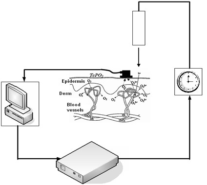 Experimental setup for controlling local tissue oxygen concentration directly  at the zone of laser irradiation