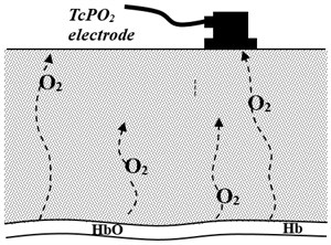 Simple model of oxygen diffusion in tissue