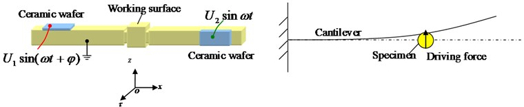 The schematic representation of the experiment on the specimen's tangential motion