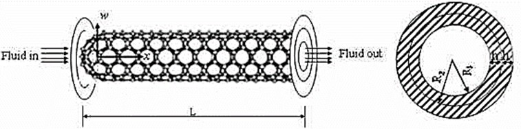 Fluid-conveying double-walled carbon nanotubes