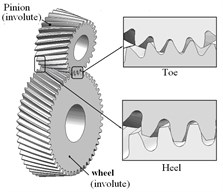Assembly model of involute and noninvolute beveloid gears