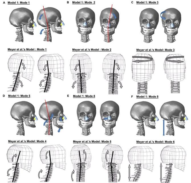 (Still Instance No.1) Comparison of the mode shapes with Meyer et al. [22]'s FE head-neck model
