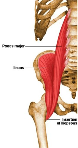 Hip Iliacus muscle: a) variation during the jump,  b) – left leg, c) – right leg; 1 high jump, 2 fast jump