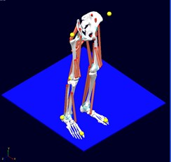 Lower body part computer – based biomechanical model for jump analysis  (bones, joints and muscles)