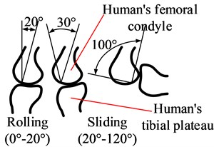 Kinematics difference between exoskeleton's knee joint and human's