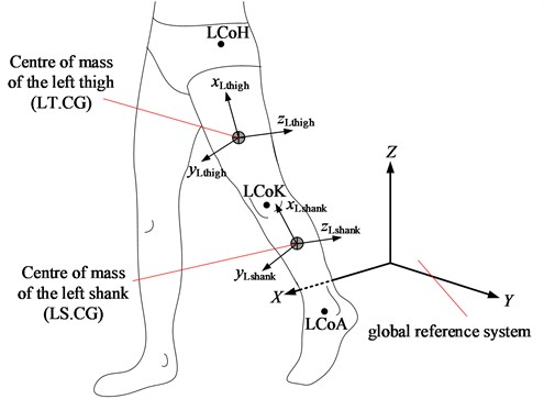 Local reference systems at segment centres of mass of human's left leg