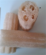 Luffa cylindrica structure in a dry state