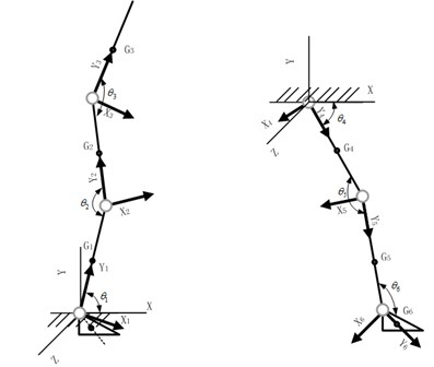 The simplified models and coordinate systems