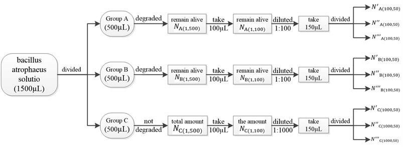 The main experimental procedure