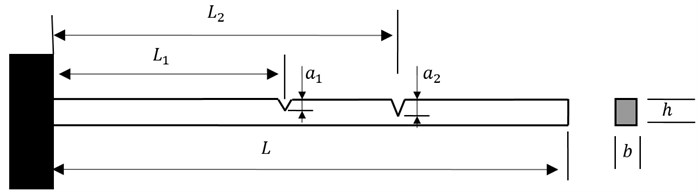 A cantilever Euler-Bernoulli beam with double cracks