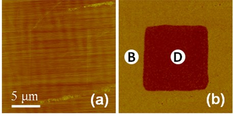 """a) Topography, b) PR phase images of SLN after the poling of +120 V on a 10×10 μm2 region. Domains marked by """"B"""" and """"D"""" are antiparallel domains"""