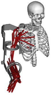 Mechanical structure of the exoskeleton: a) Schematic and degrees of freedom, b) back and  c) side view of the exoskeleton fitted to the human arm model, d) the exoskeleton  and the human arm when the elbow is in a 90 degrees position