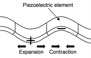 Electrostrictive behavior