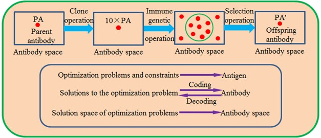 Topological structures of the traditional immune algorithm