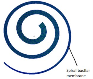 The finite element model  of the spiral basilar membrane