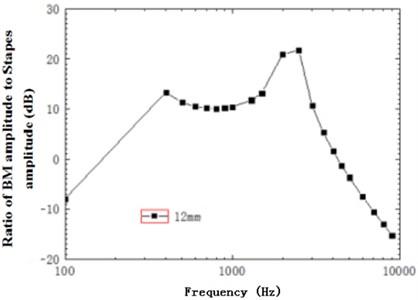 Ratio of basilar membrane amplitude to stapes amplitude at 12 mm