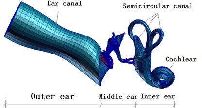 A complete finite element model of human ear