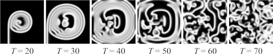 The evolution of a spiral wave with breakups (u-field only) with parameters set to: L=100, a=0.7, b=0.06, dt=0.05ϵ=0.1, g=u3-v