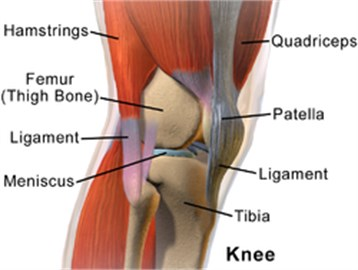 Lateral aspect of right knee (Wikipedia)