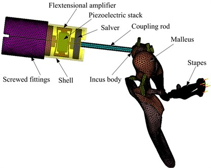 Coupling mechanical model of the human middle ear and the flextensional piezoelectric actuator