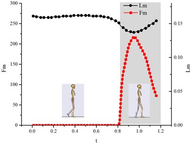Variation curve of muscle active force Fm versus the  muscle length Lm (biceps femoris muscle)