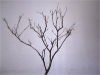 Scene image and binary image of branch