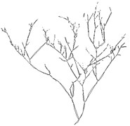 Features extraction of branch