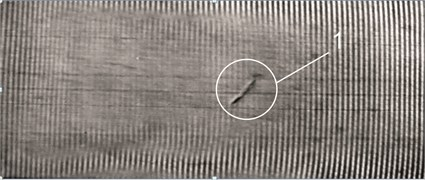 The first eigenmode of partially biodegradable LDPE1 film (with tear defect)  (vibration frequency 156 Hz, amplitude 2×10-6m); 1 – tear defect