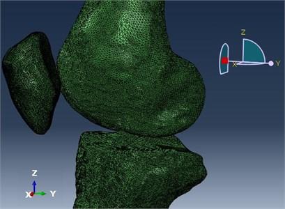 Knee bone model for simulation