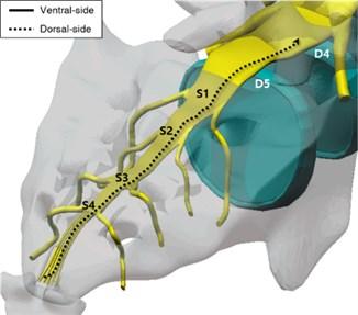 Four catheter manipulation training scenarios