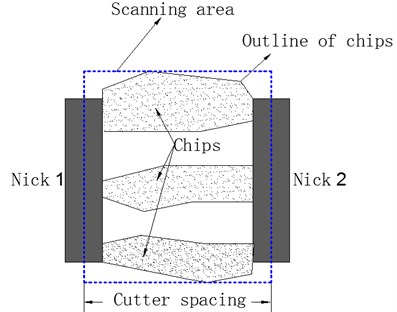 Diagram of scanning area used in morphology measurements