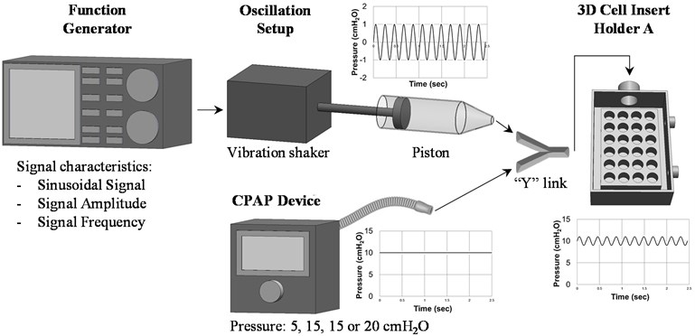 Schematic diagram to describe the process and set up to generate ± 1 cm H2O sinusoidal pressure oscillation superimposed to 10 cm H2O continuous pressures on the cell lines. Pressure readings  as a function of time were measured with the 2080P digital manometer