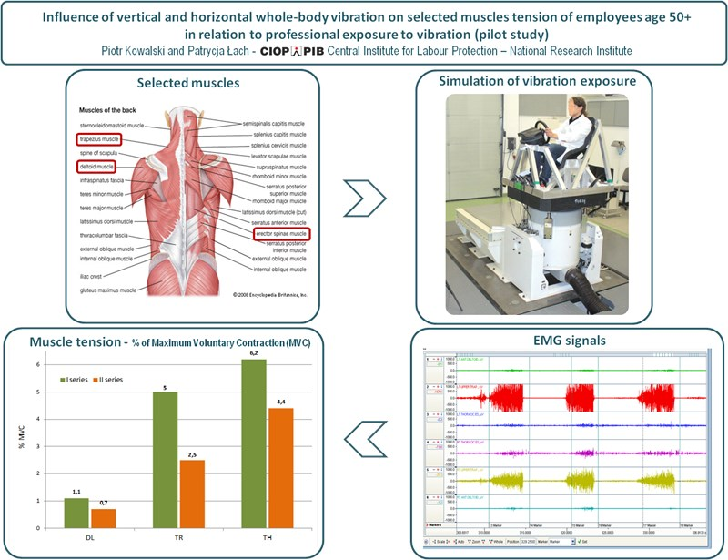 Influence of vertical and horizontal whole-body vibration on selected muscles tension of employees age 50+ in relation to professional exposure to vibration (pilot study)