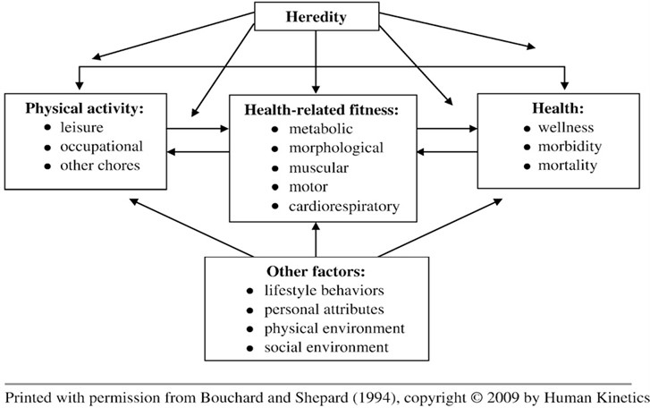 The theoretical model of the relationships among habitual physical activity,  health-related fitness, and health status (Bouchard and Shephard 1994)