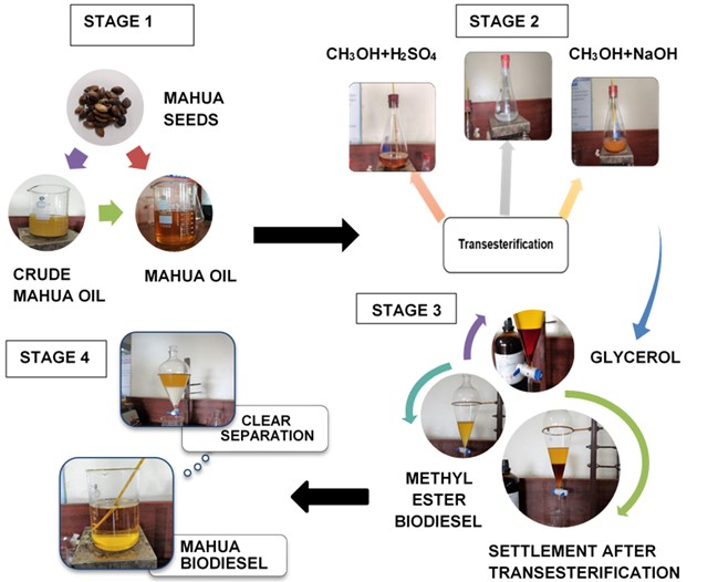 Stages of biodiesel production