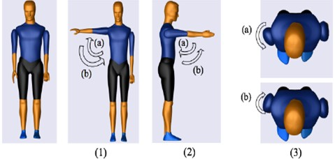 Shoulder movements: Initial position (Extreme left), (1a) Shoulder abduction,  (1b) Shoulder adduction, (2a) Shoulder extension (2b), Shoulder flexion,  (3a) Shoulder internal rotation, and (3b) Shoulder external rotation