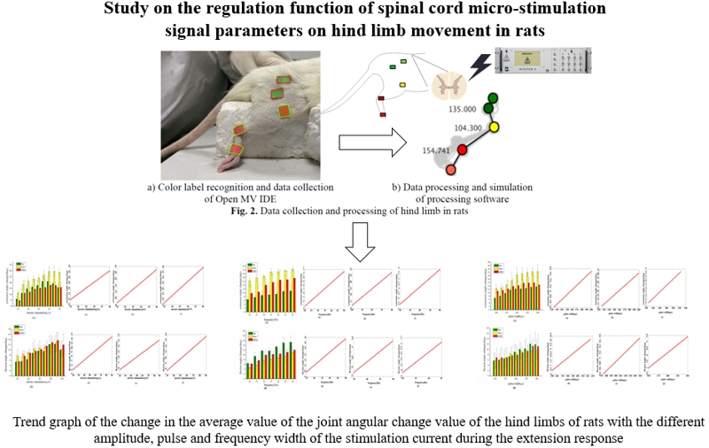 Study on the regulation function of spinal cord micro-stimulation signal parameters on hind limb movement in rats