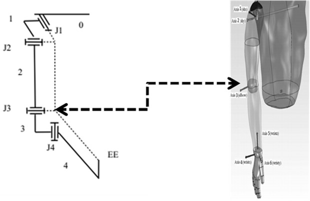 Model of arm exoskeleton structure with force feedback system, left – model of arm  exoskeleton structure with force feedback (4 degrees of freedom) including 2 joints in the shoulder,  2 joints in the elbow (J1-J4), 5 links (0-4), and a handle held by the hand (EE) [14, 15],  right – human body from BodyWorks [9]